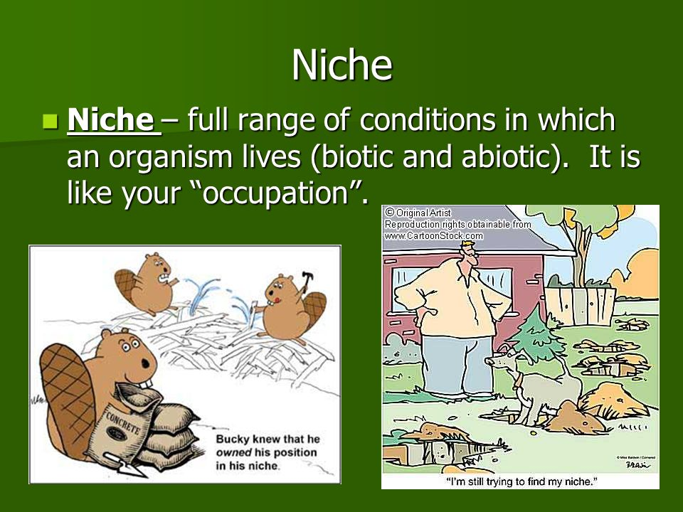 Niche Niche – full range of conditions in which an organism lives (biotic and abiotic).