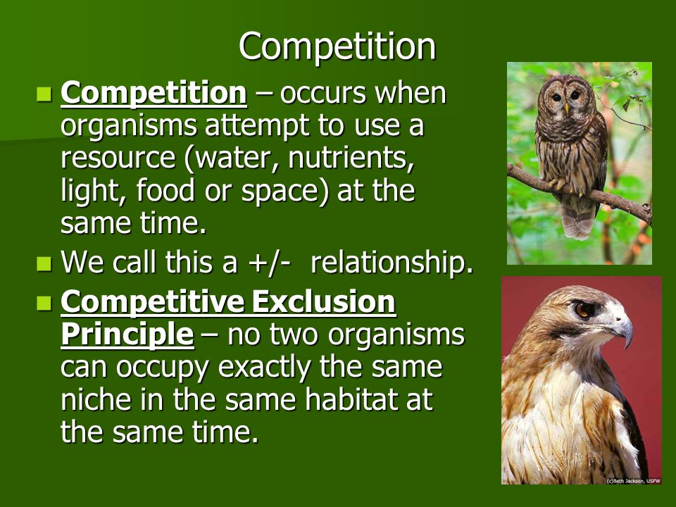 Competition Competition – occurs when organisms attempt to use a resource (water, nutrients, light, food or space) at the same time.