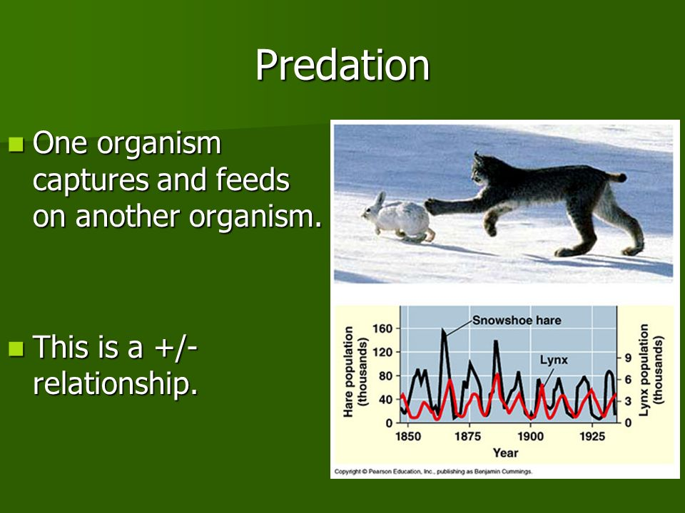 Predation One organism captures and feeds on another organism.