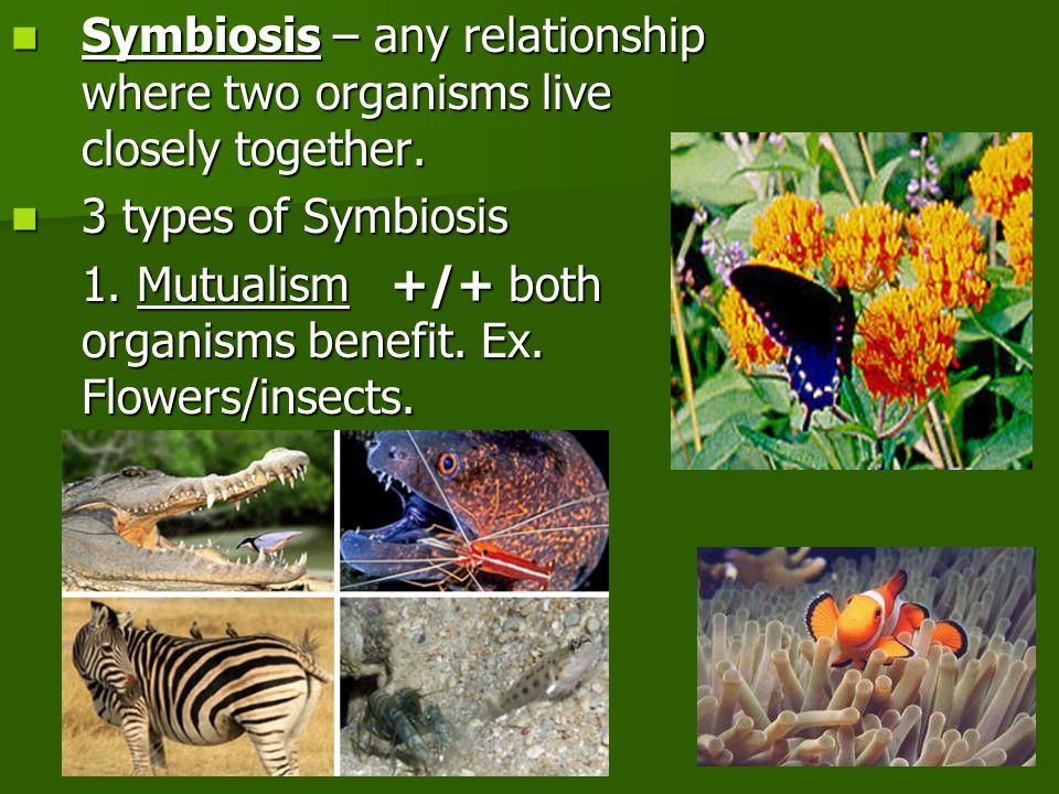 Symbiosis – any relationship where two organisms live closely together.