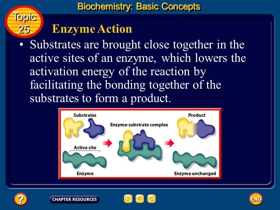 Biochemistry: Basic Concepts