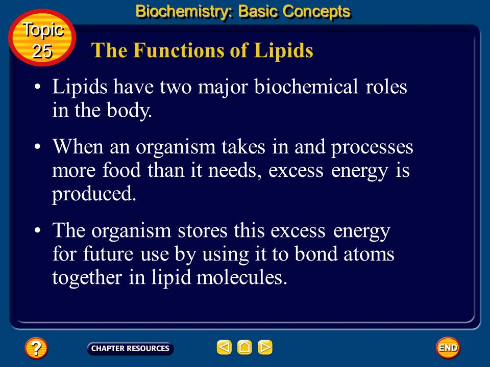 The Functions of Lipids