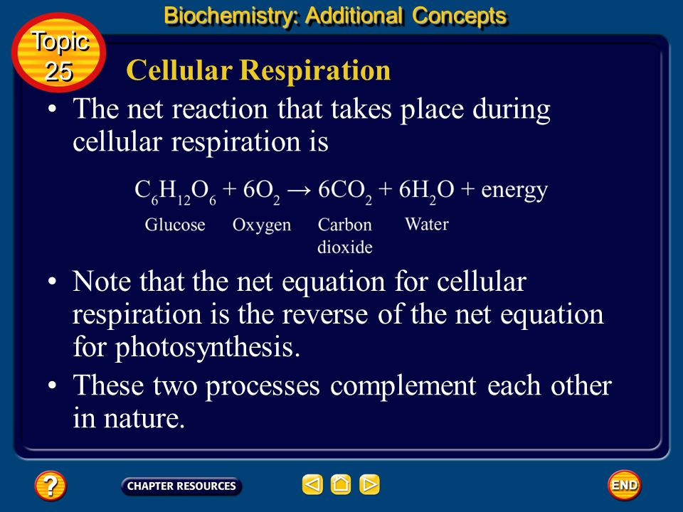 The net reaction that takes place during cellular respiration is