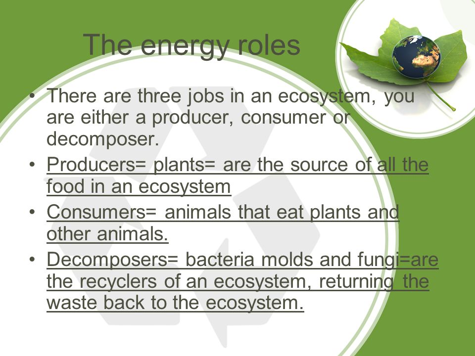 What Chemical Reaction Gets Energy From The Food You Eat