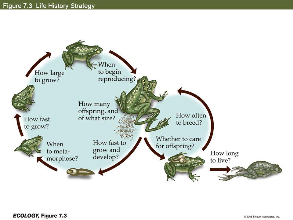 Figure 7.3 Life History Strategy