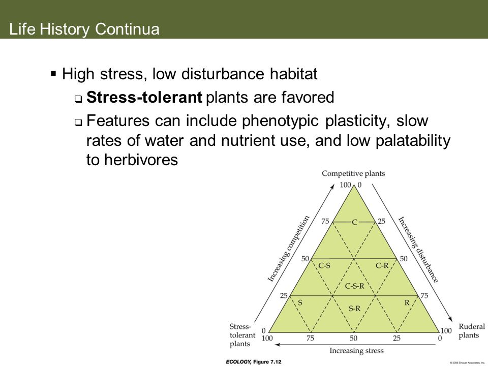 Life History Continua High stress, low disturbance habitat. Stress-tolerant plants are favored.