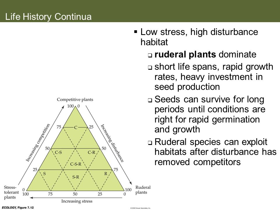 Life History Continua Low stress, high disturbance habitat. ruderal plants dominate.