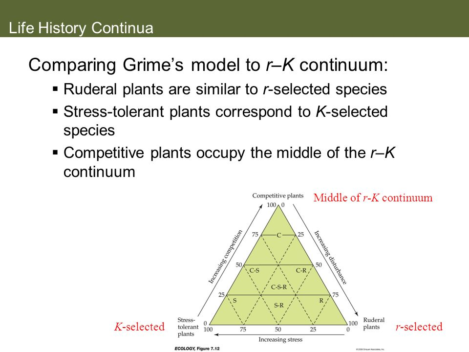 Comparing Grime's model to r–K continuum: