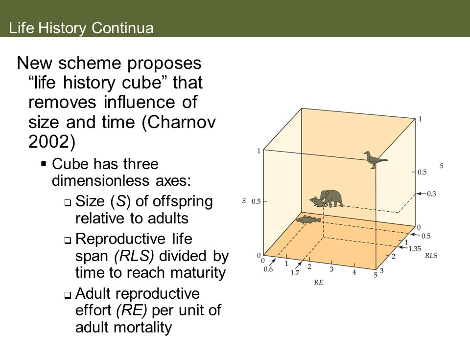 Life History Continua New scheme proposes life history cube that removes influence of size and time (Charnov 2002)