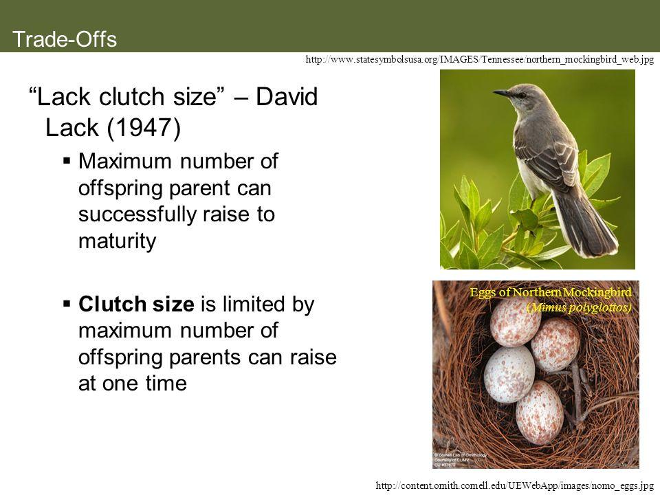 Lack clutch size – David Lack (1947)
