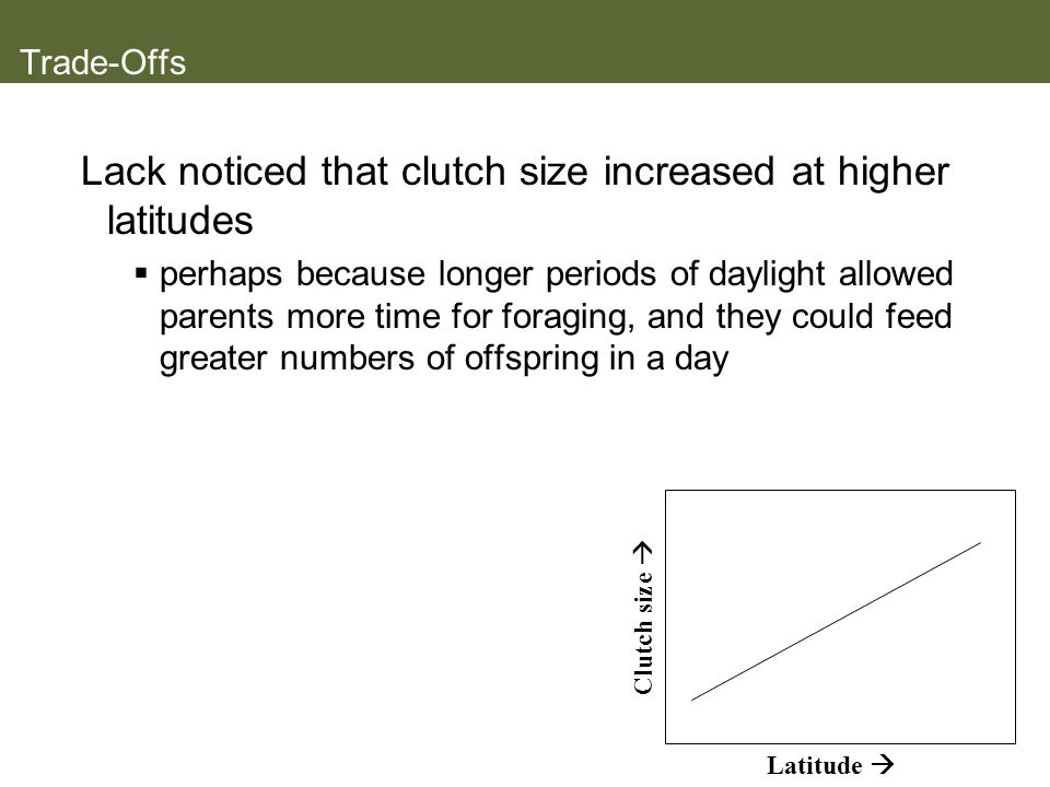 Lack noticed that clutch size increased at higher latitudes