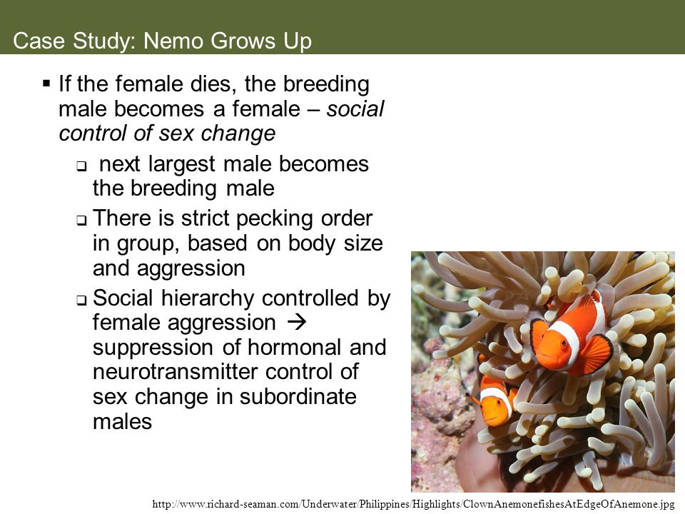 Case Study: Nemo Grows Up