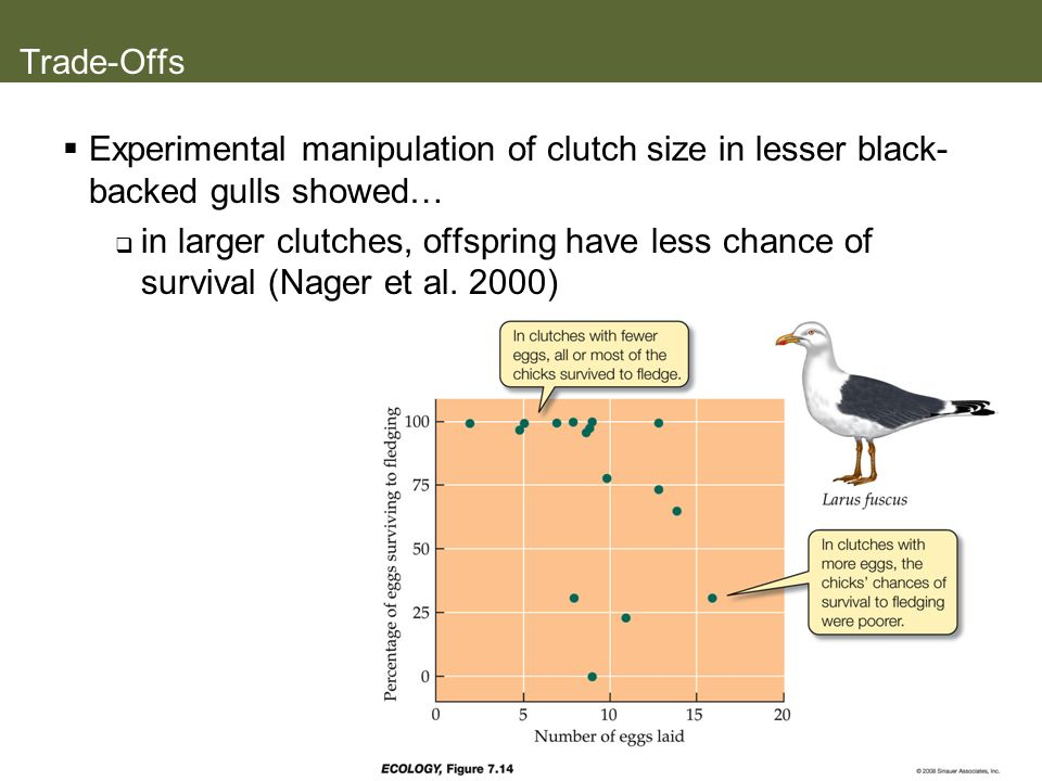 Trade-Offs Experimental manipulation of clutch size in lesser black-backed gulls showed…