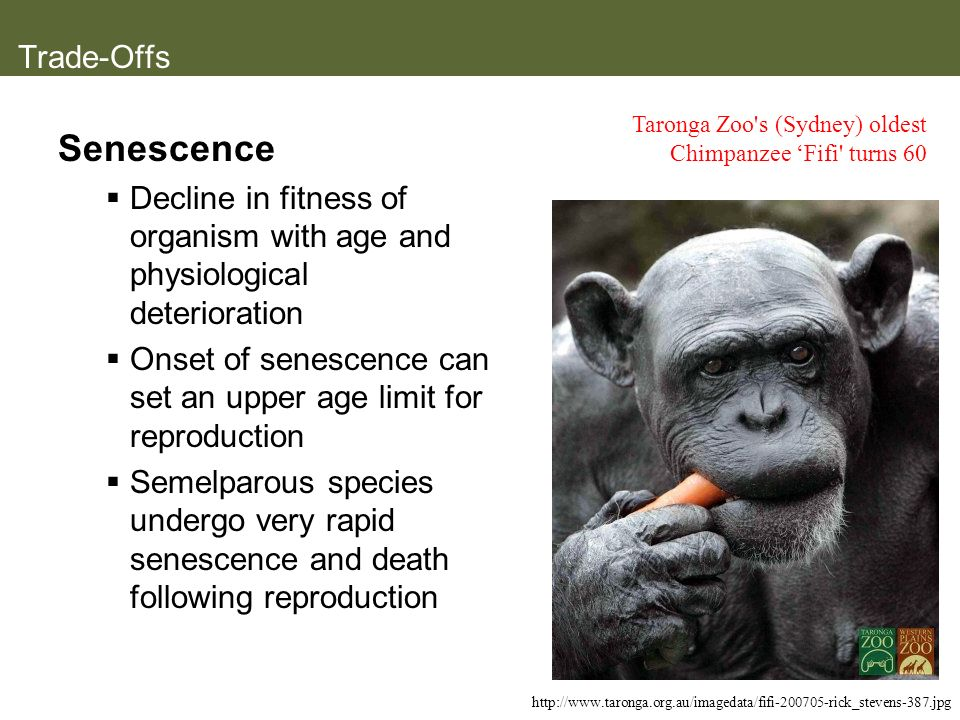 Senescence Trade-Offs