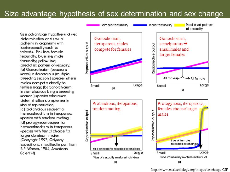 Size advantage hypothesis of sex determination and sex change