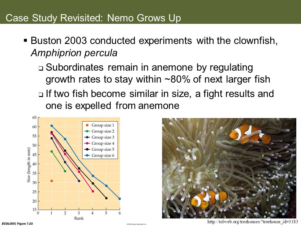 Case Study Revisited: Nemo Grows Up