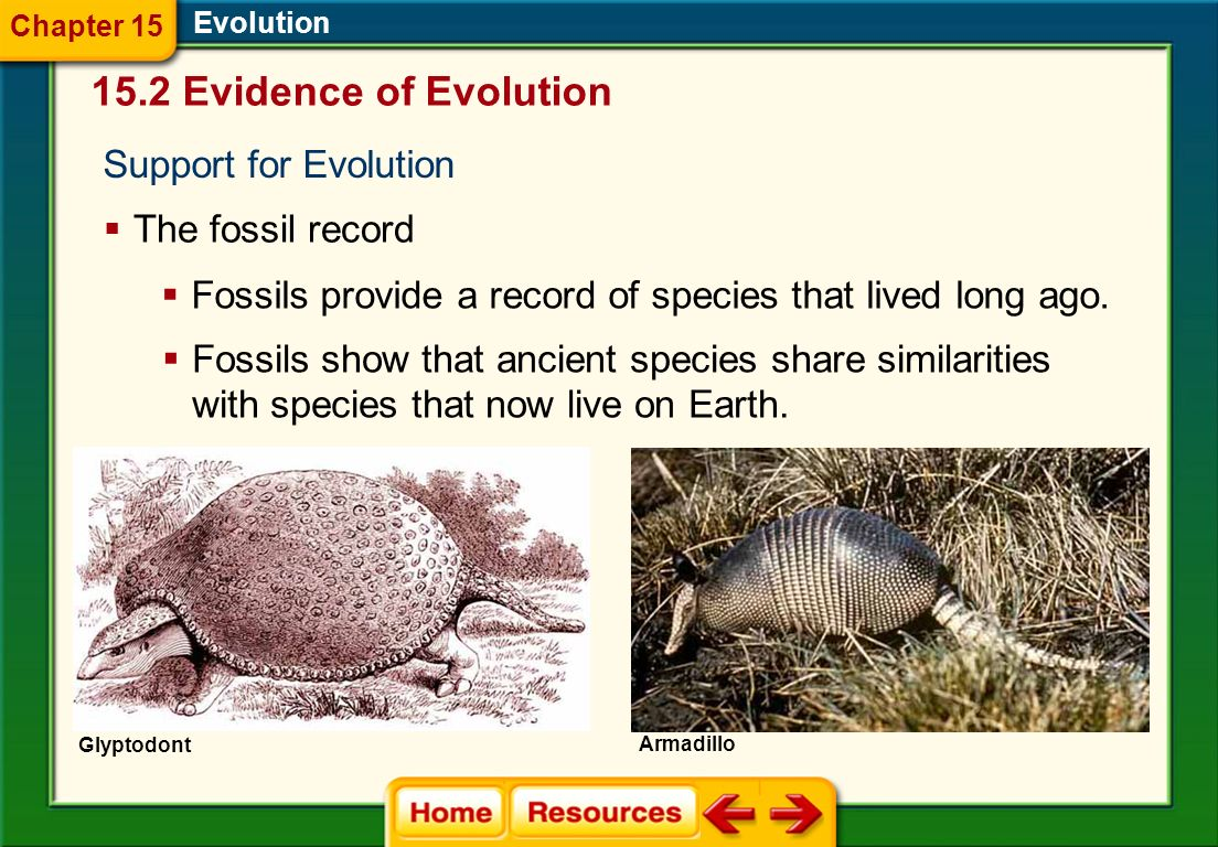 15.2 Evidence of Evolution Support for Evolution The fossil record