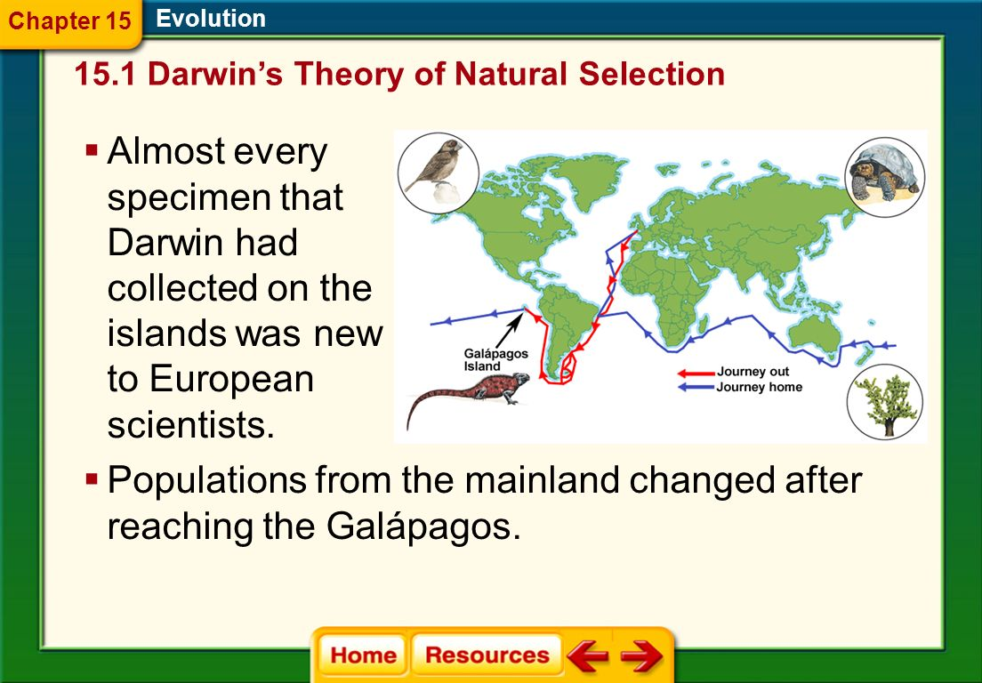 Populations from the mainland changed after reaching the Galápagos.