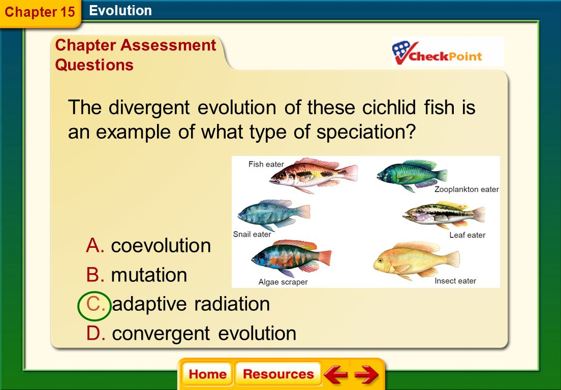 The divergent evolution of these cichlid fish is
