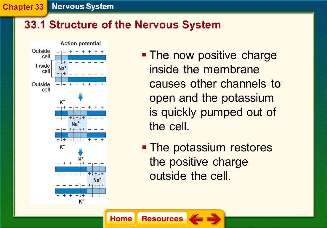 The potassium restores the positive charge outside the cell.