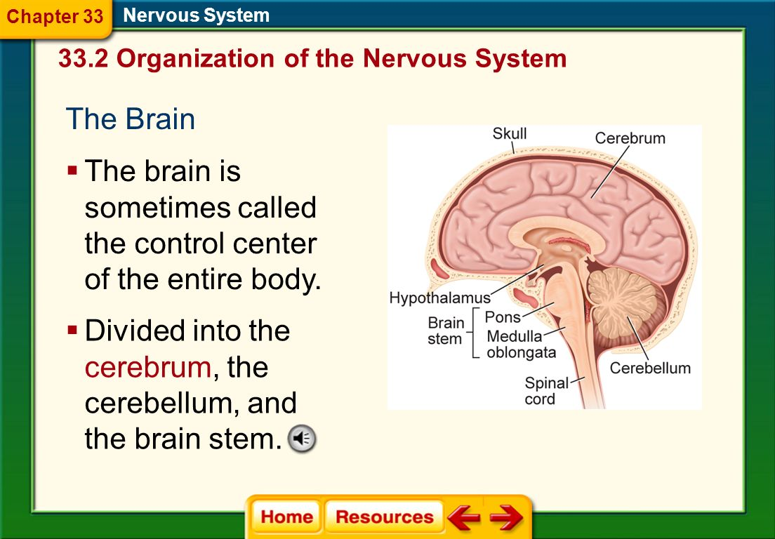 The brain is sometimes called the control center of the entire body.