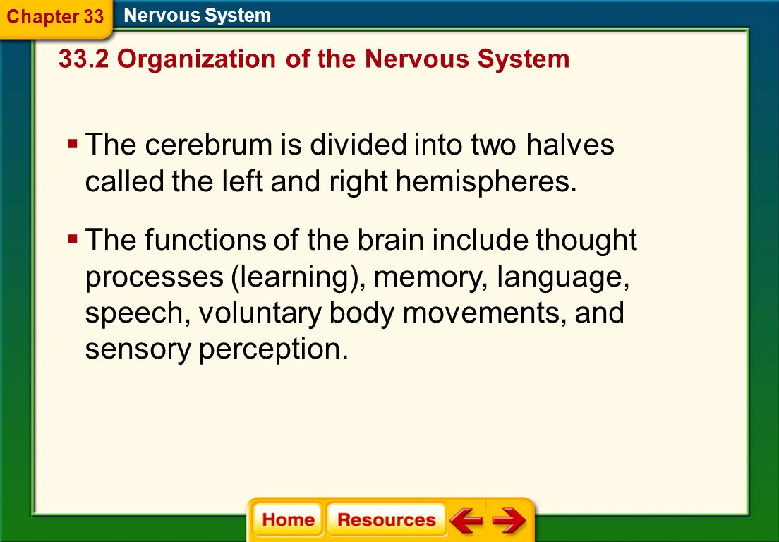 Chapter 33 Nervous System. 33.2 Organization of the Nervous System. The cerebrum is divided into two halves called the left and right hemispheres.