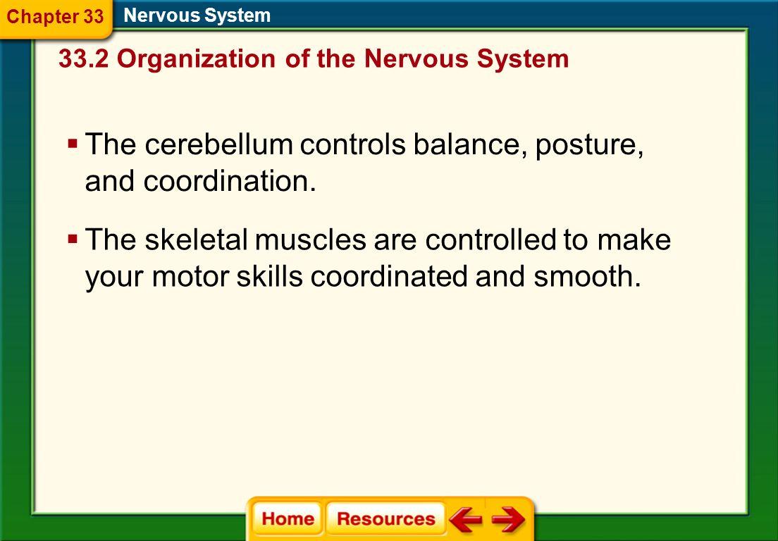 The cerebellum controls balance, posture, and coordination.
