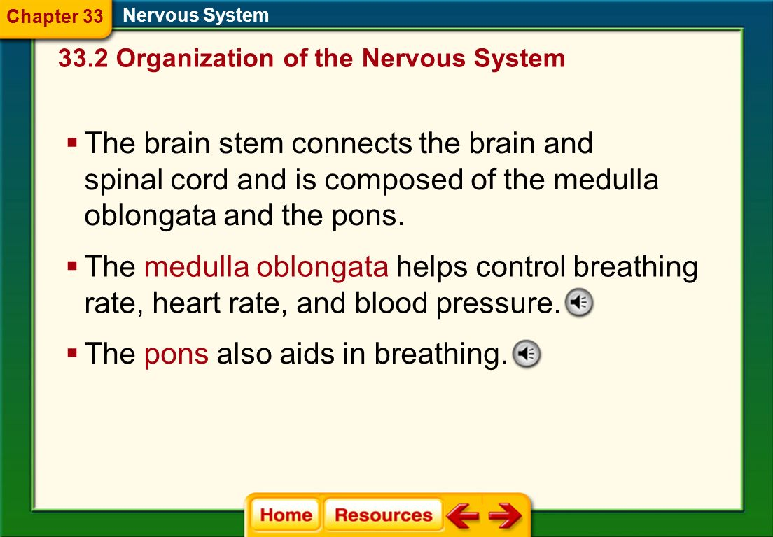 The pons also aids in breathing.