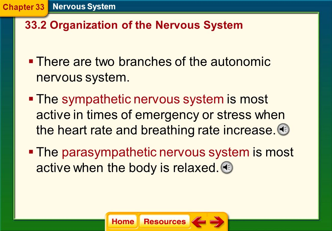 There are two branches of the autonomic nervous system.