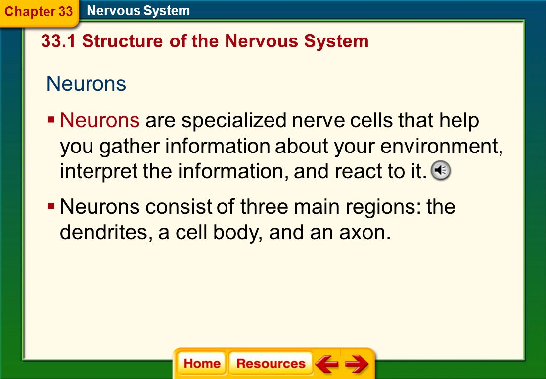 Chapter 33 Nervous System. 33.1 Structure of the Nervous System. Neurons.