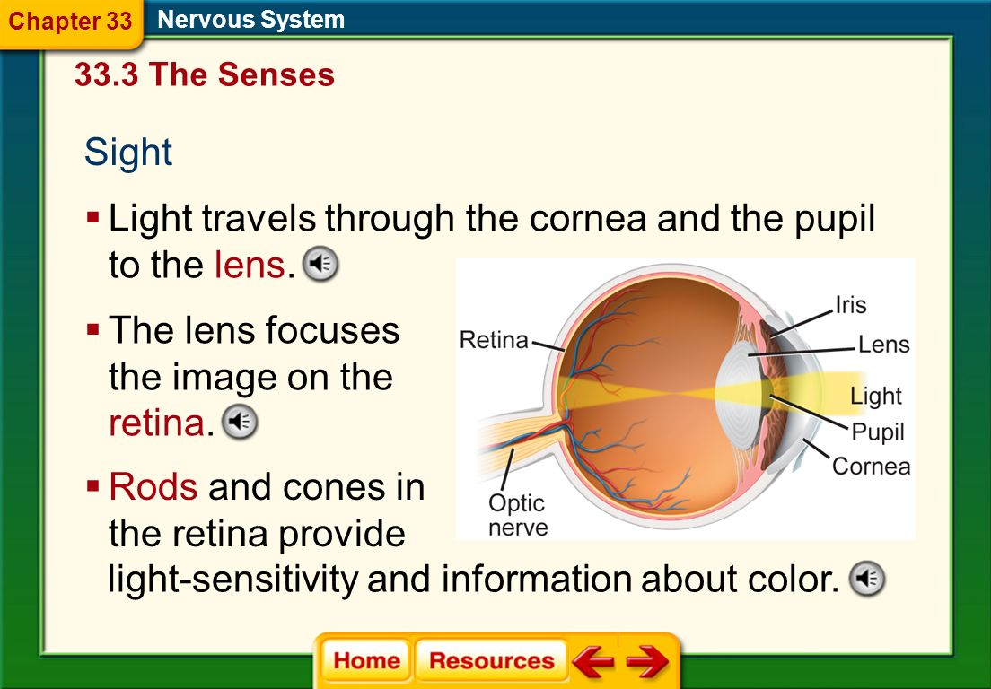 Light travels through the cornea and the pupil to the lens.