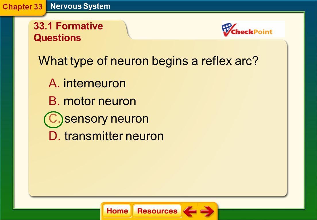 What type of neuron begins a reflex arc
