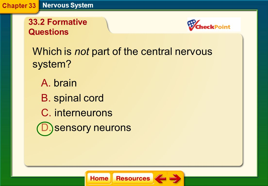 Which is not part of the central nervous system