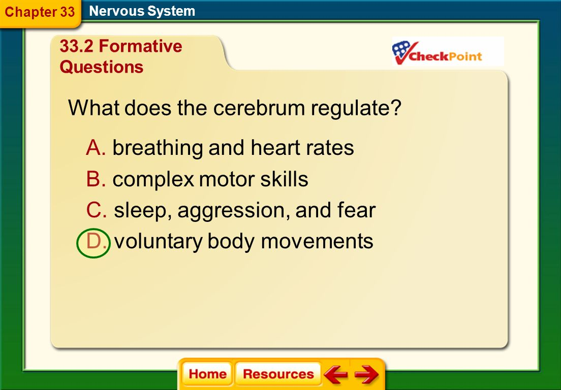 What does the cerebrum regulate