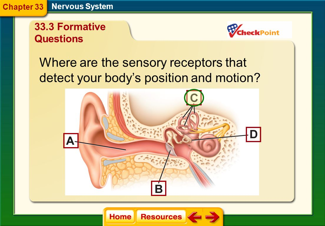 Where are the sensory receptors that