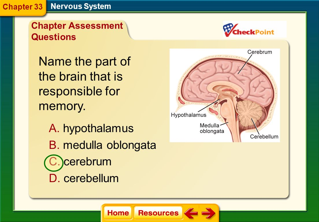 Name the part of the brain that is responsible for memory.