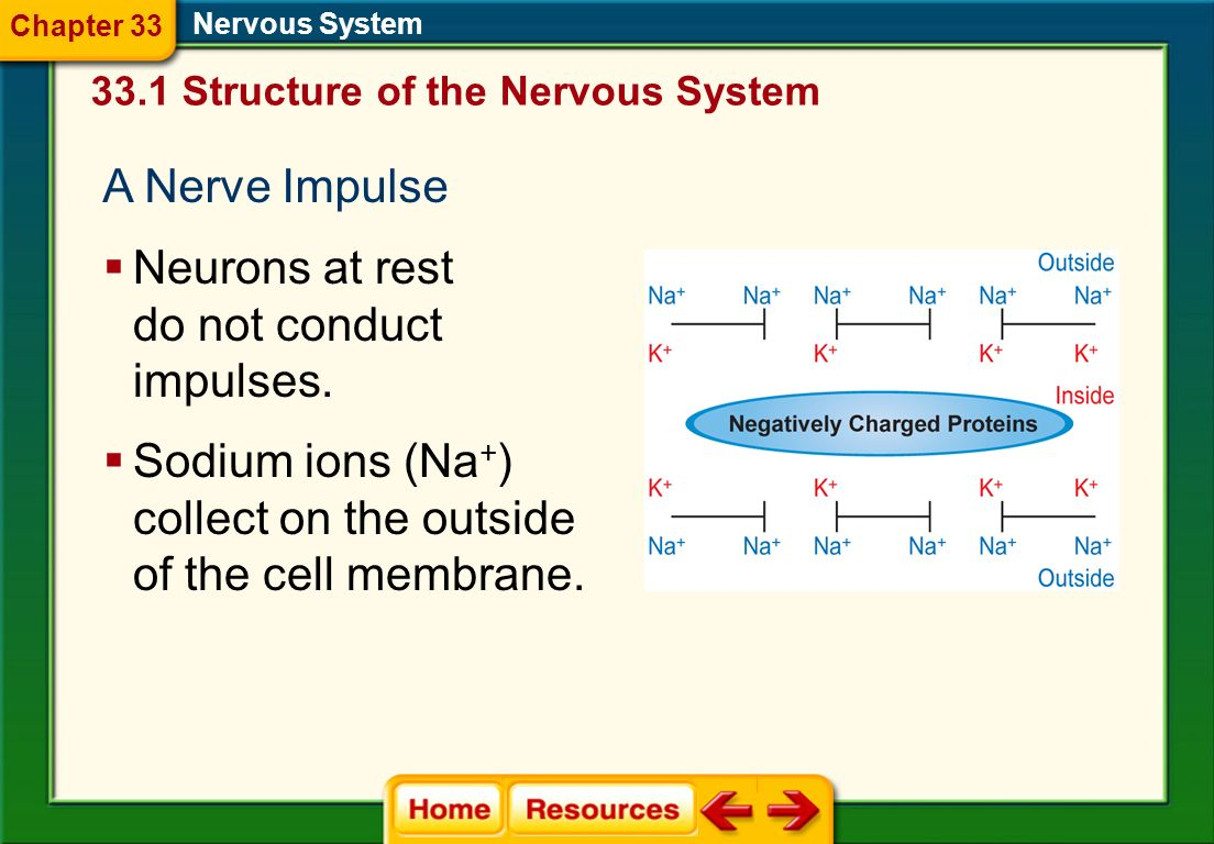 Neurons at rest do not conduct impulses.