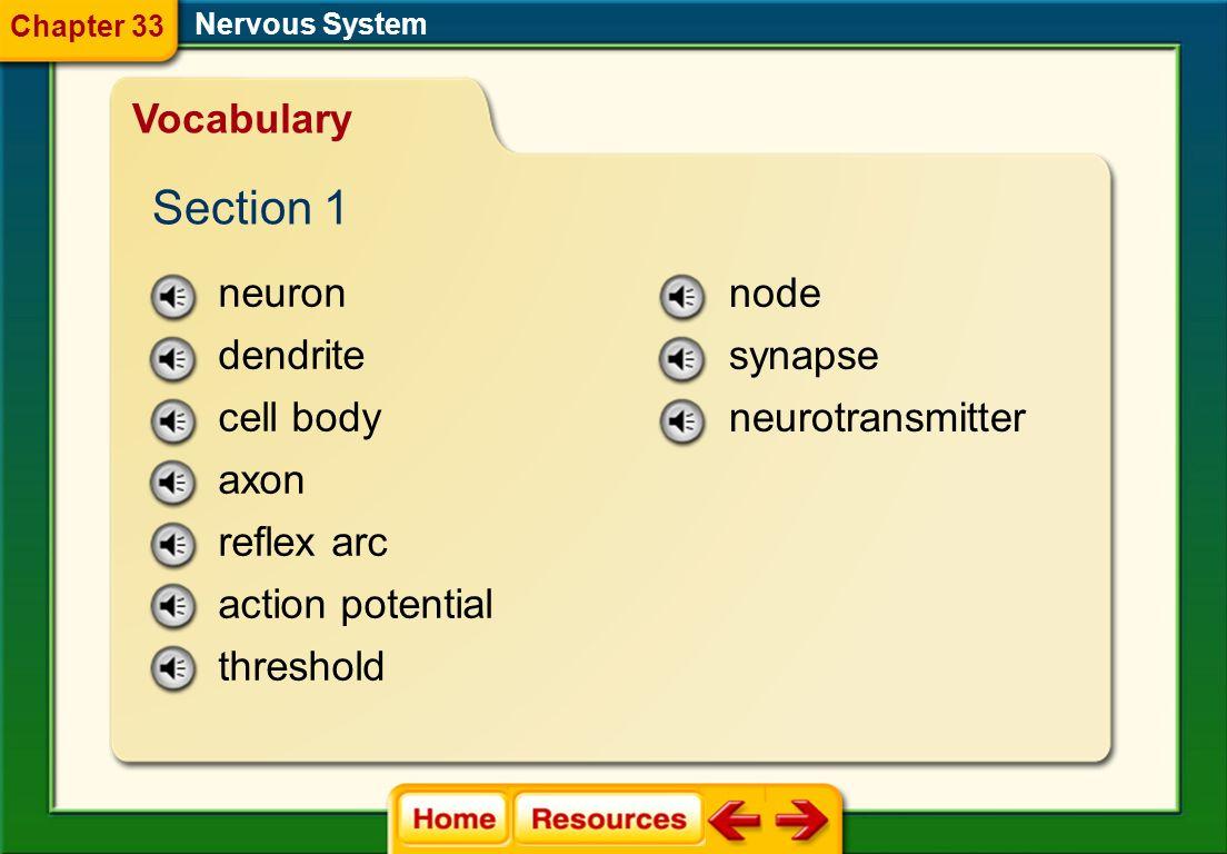 Section 1 Vocabulary neuron dendrite cell body axon reflex arc