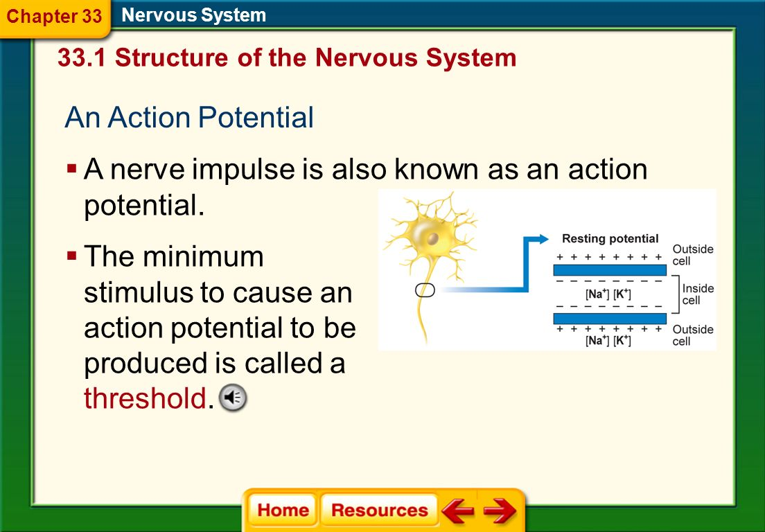 A nerve impulse is also known as an action potential.