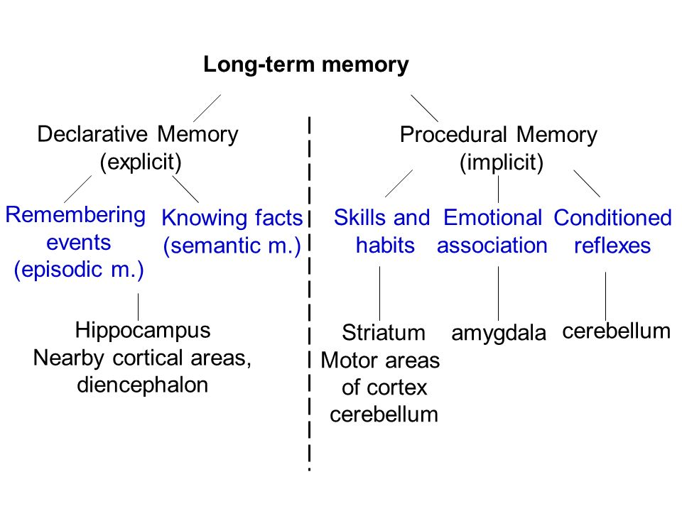 types of memory essay Long term memory is believed to be divided into 3 main types of memory one of which is episodic memory which stores memories of personal events in our lives these memories are complex as a single 'episode' (memory) includes several elements such as who was involved, the place, objects etc.