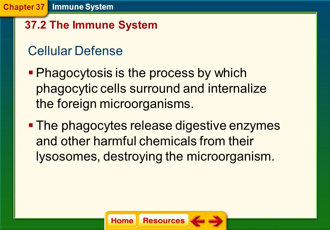 Chapter 37 Immune System The Immune System. Cellular Defense.