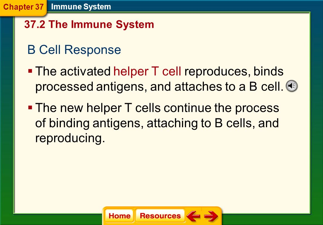 Chapter 37 Immune System The Immune System. B Cell Response.