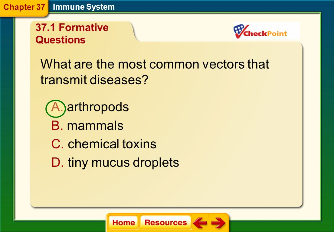 What are the most common vectors that transmit diseases