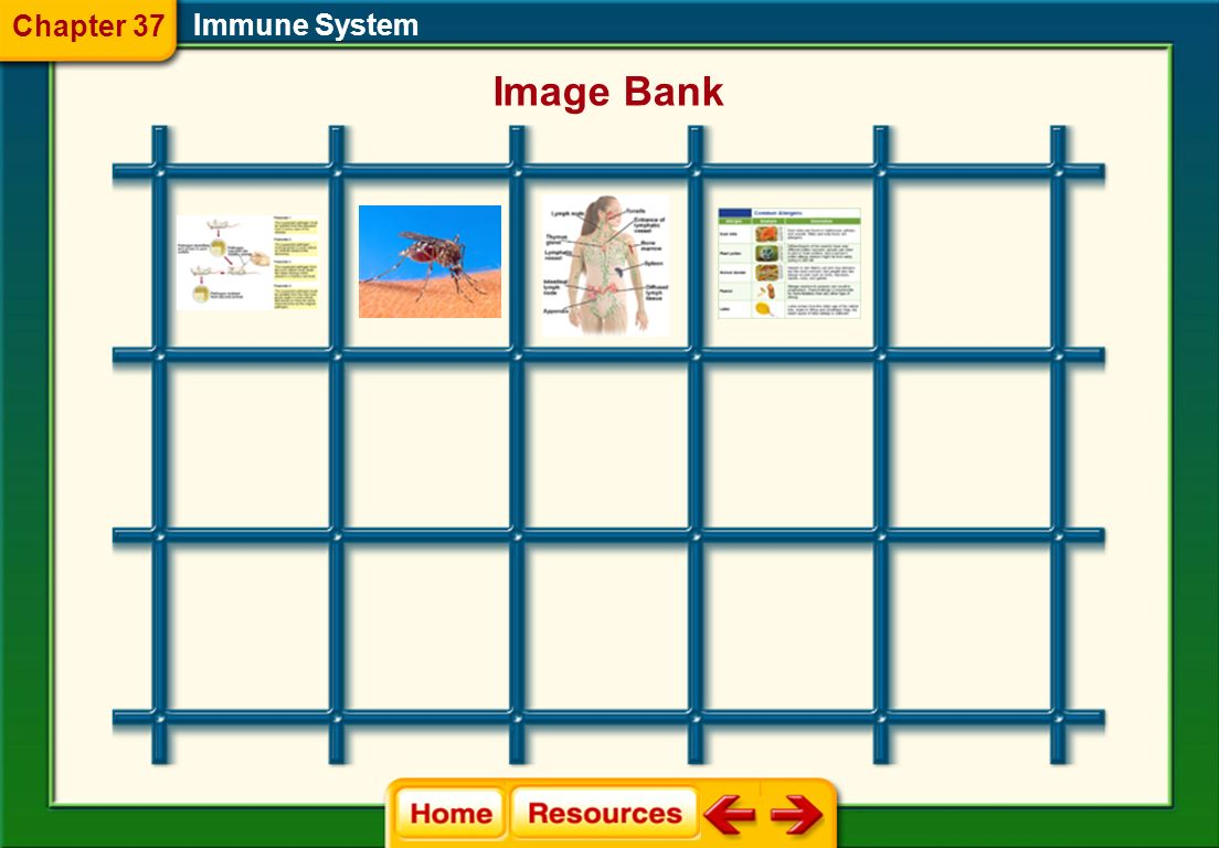 Chapter 37 Immune System Image Bank
