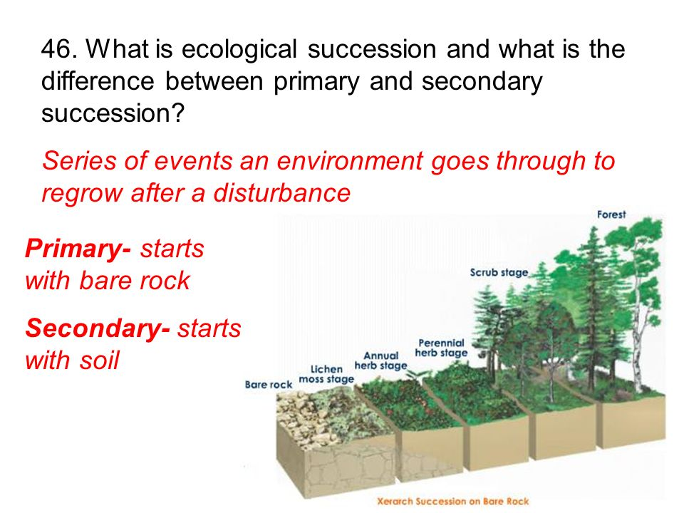 46. What is ecological succession and what is the difference between primary and secondary succession