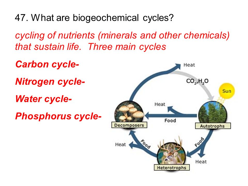 47. What are biogeochemical cycles