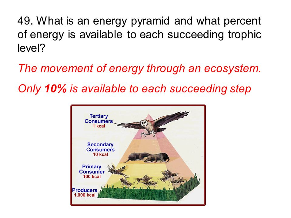 49. What is an energy pyramid and what percent of energy is available to each succeeding trophic level