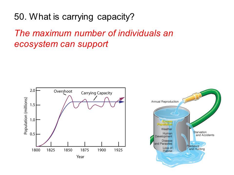 50. What is carrying capacity