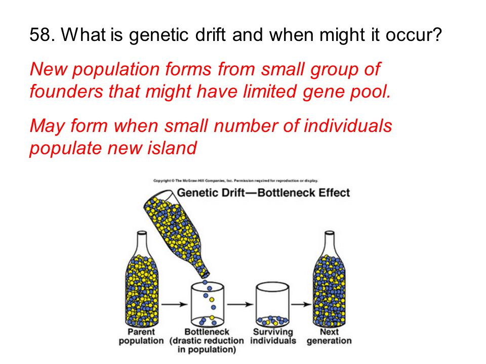 58. What is genetic drift and when might it occur