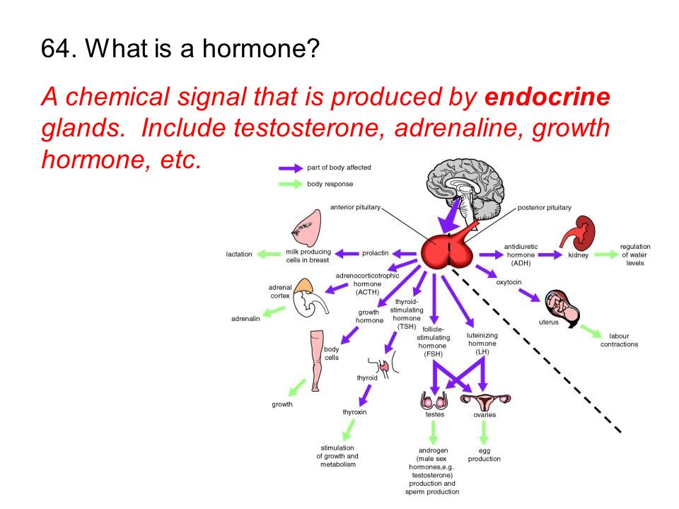 64. What is a hormone. A chemical signal that is produced by endocrine glands.